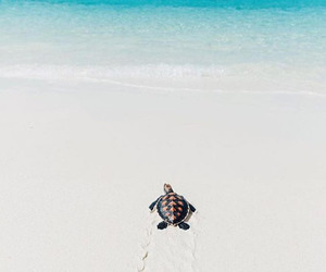 beach, turtle, and sea image