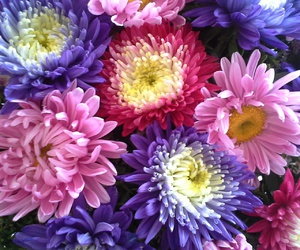 bouquet, flowers, and petals image