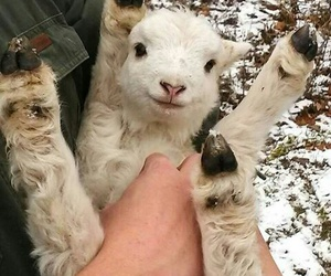 animal, cute, and little image