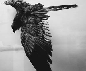 bird and animal image