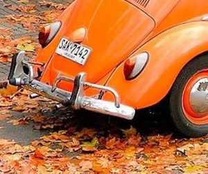 aesthetic, car, and leaves image