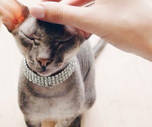 animal, cat, and caturday image
