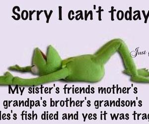 funny, frog, and quotes image