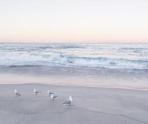 beach, sea, and bird image