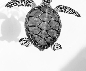 turtle, animal, and black and white image