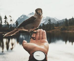 bird, nature, and animal image