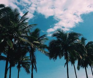 palms, summer, and clouds image