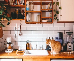 cat, home, and decor image