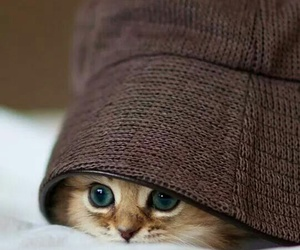 peekaboo and wheresmyhat image