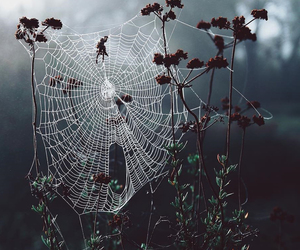 spider, cobweb, and nature image