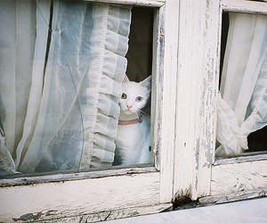 cat, window, and white image