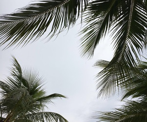 goals, palm trees, and sky image