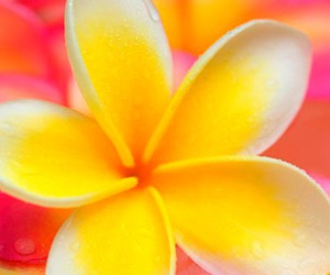 flower, pretty, and yellow image