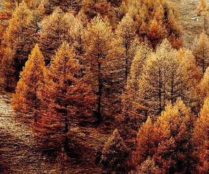 forest and autumn image