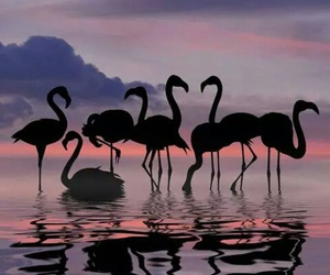 flamingo, water, and cute image