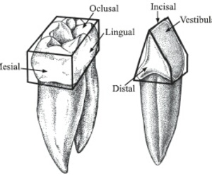 odontología, odontology, and bucal image