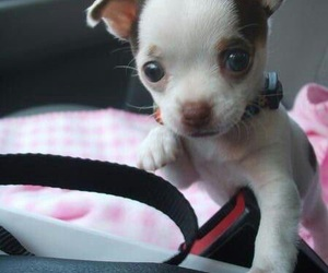 beauty, littles, and doglover image