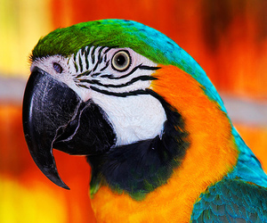 colorful, parrot, and pretty image