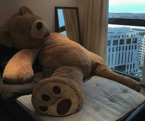 bear, gift, and teddy image