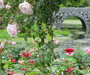 garden and rose image