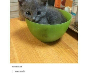 adorable, animals, and baby animals image