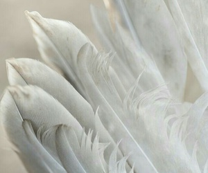 white, feathers, and wings image