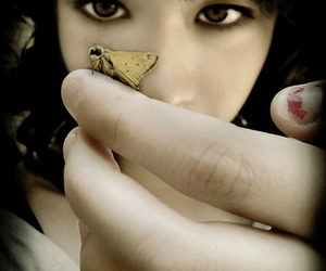 butterfly, hand, and moth image