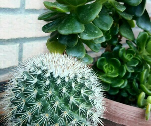 cactus, fresh, and plants image