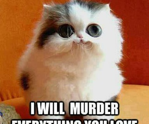 cat, funny, and murder image