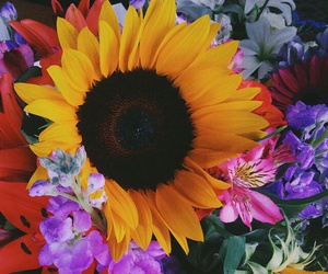 flowers, sunflower, and boho image