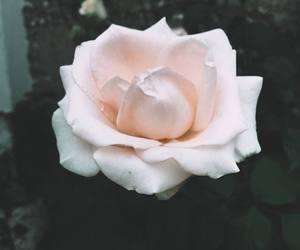 beautiful, deep, and flower image