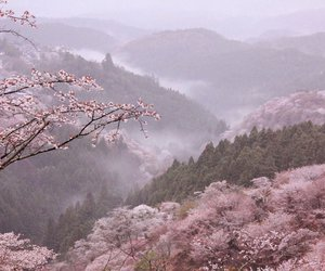 pink, nature, and aesthetic image
