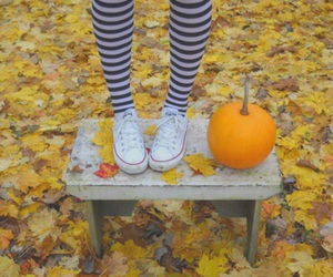 fashion, leaves, and pumpkin image