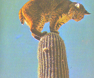 cactus and lynx image