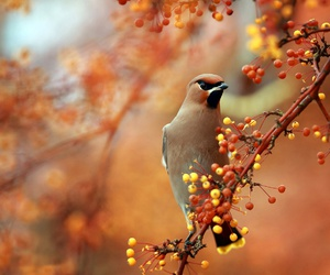 autumn and photo image