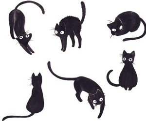 cat, black, and black cat image