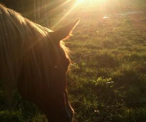 art, beautifull, and horse image