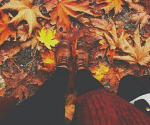 autumn, leaves, and finfolkproductions image