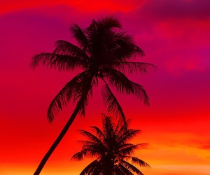 background, iphone, and palm trees image