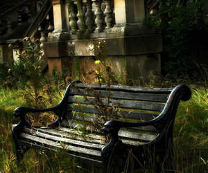abandoned, lonely, and plants image