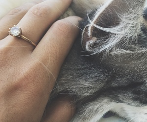 affection, cat, and ring image