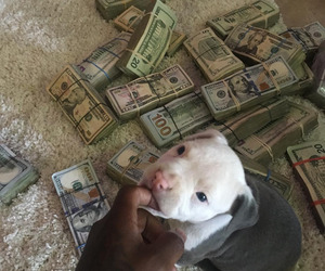 money and dog image