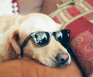 dog, sunglasses, and glasses image