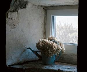 Image by Marina Lieberman( König-Nebel)