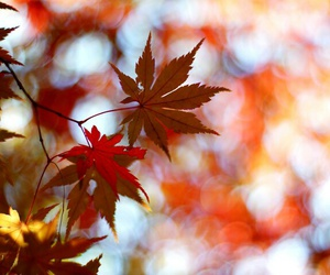 fall, landscape, and red image