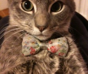 bow, cat, and kitty image