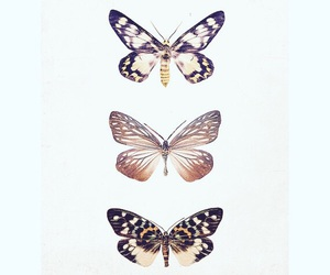 animals, art, and butterfly image