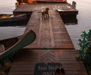 boat, dog, and lake image