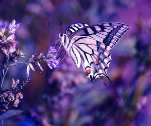 butterfly and ♡♡♡ image
