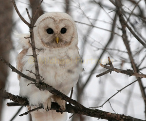 owl, forest, and snow image